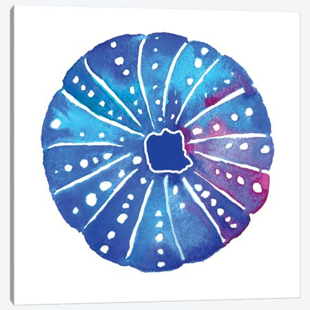 Shell Sea Urchin I Canvas Print #JLY58} by Jo Lynch Canvas Artwork