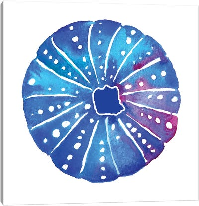 Shell Sea Urchin I Canvas Art Print