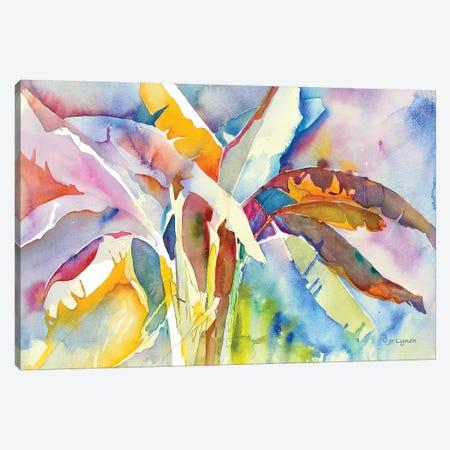 Bannana Palm Plant Canvas Print #JLY68} by Jo Lynch Art Print