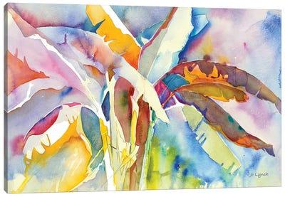 Bannana Palm Plant Canvas Art Print