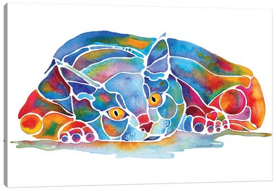Calypso Cat Canvas Art Print