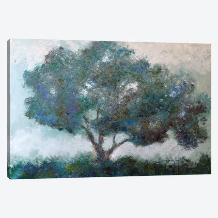 Mountaintop Tree Canvas Print #JMF23} by Joseph Marshal Foster Canvas Art Print
