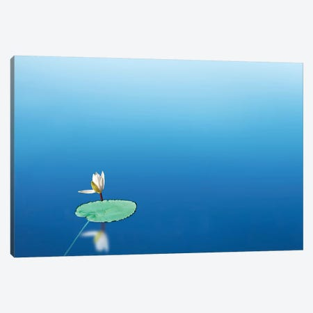 Lilypad I Canvas Print #JML119} by James McLoughlin Canvas Wall Art