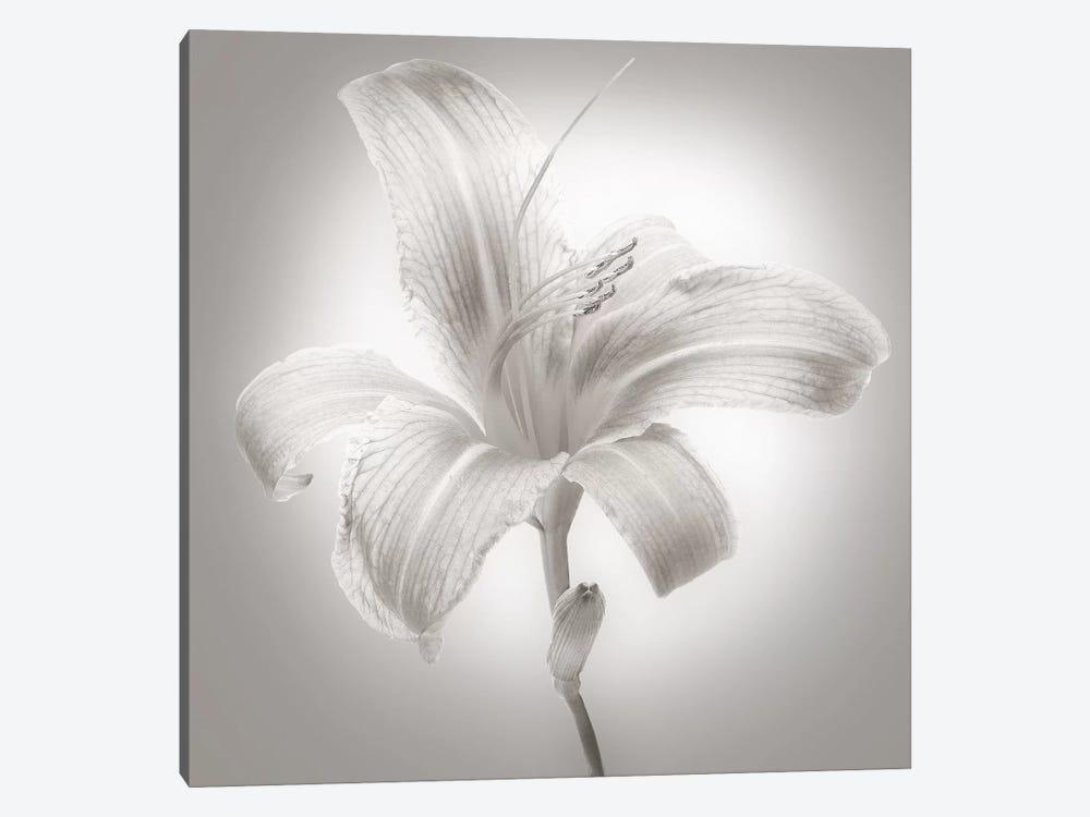 Tiger Lily I by James McLoughlin 1-piece Canvas Artwork