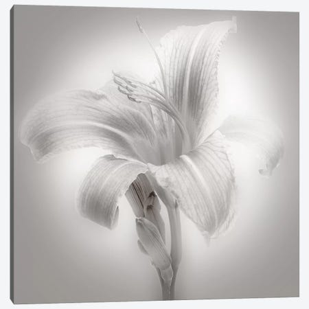 Tiger Lily II Canvas Print #JML18} by James McLoughlin Canvas Artwork
