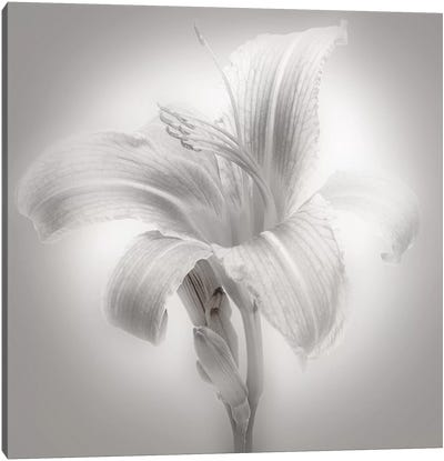 Tiger Lily II Canvas Art Print