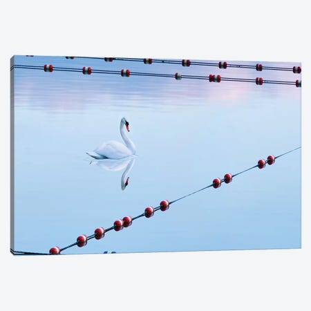 Swan and Ropes Canvas Print #JML216} by James McLoughlin Canvas Artwork