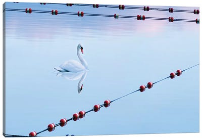 Swan and Ropes Canvas Art Print