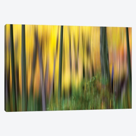 Forest Run II Canvas Print #JML39} by James McLoughlin Canvas Wall Art