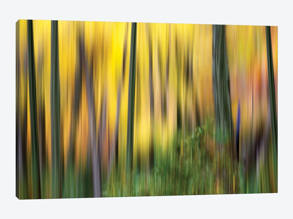 Forest Run II 1-piece Canvas Wall Art