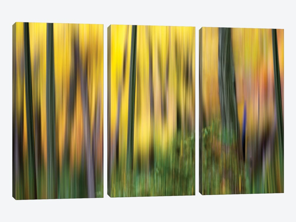 Forest Run II 3-piece Canvas Wall Art