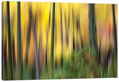 Forest Run II Canvas Art Print