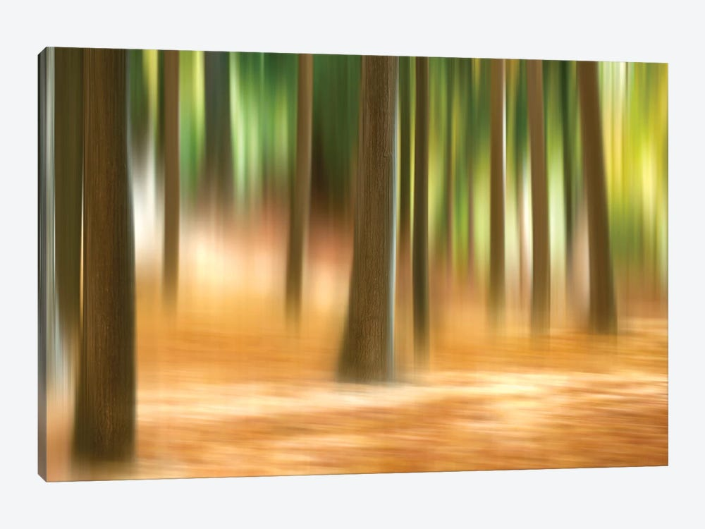 Forest Run III by James McLoughlin 1-piece Canvas Artwork