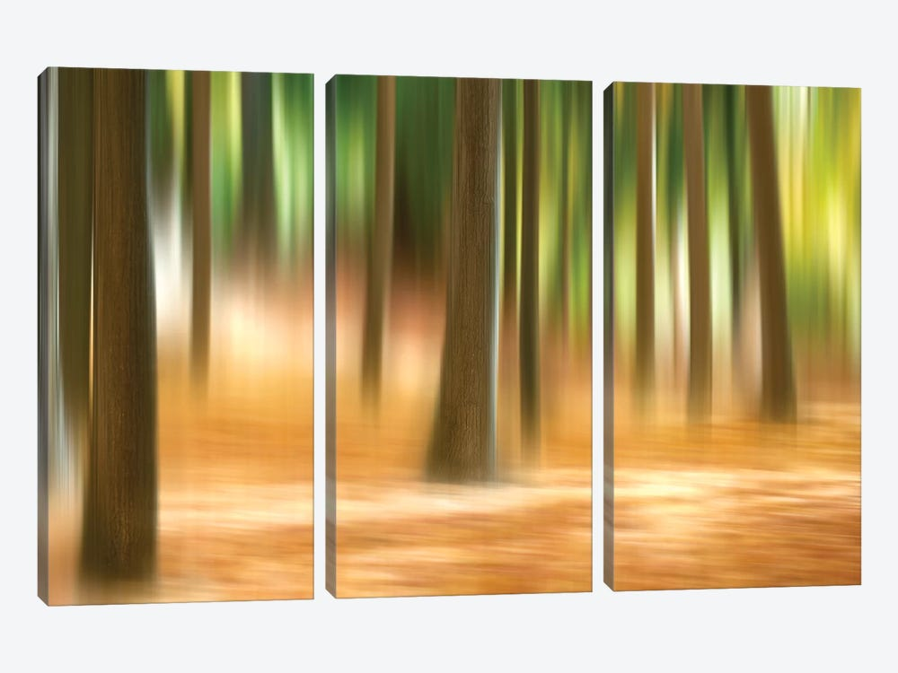 Forest Run III by James McLoughlin 3-piece Canvas Artwork