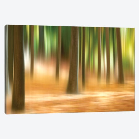 Forest Run III Canvas Print #JML40} by James McLoughlin Art Print
