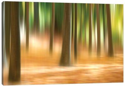 Forest Run III Canvas Art Print