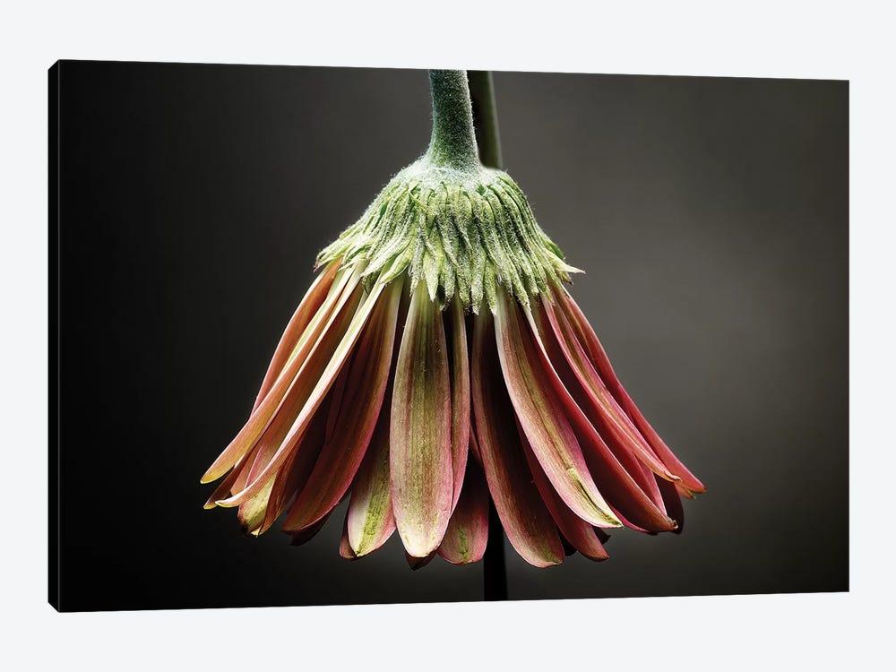Studio Flowers II by James McLoughlin 1-piece Canvas Art