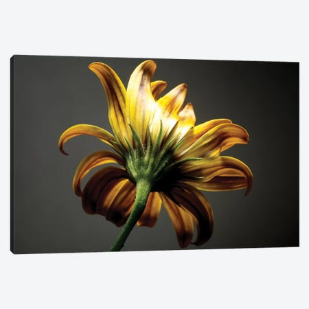 Studio Flowers III Canvas Print #JML43} by James McLoughlin Canvas Print
