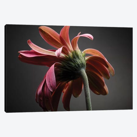 Studio Flowers IV Canvas Print #JML44} by James McLoughlin Canvas Artwork