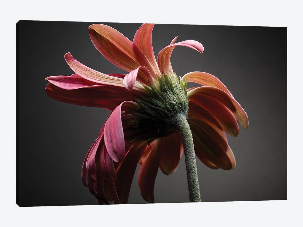 Studio Flowers IV by James McLoughlin 1-piece Canvas Art