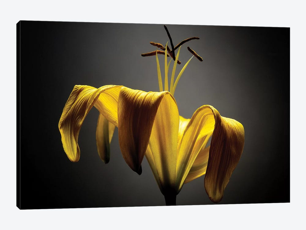 Studio Flowers V by James McLoughlin 1-piece Art Print