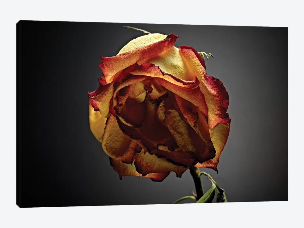 Studio Flowers VI by James McLoughlin 1-piece Canvas Wall Art