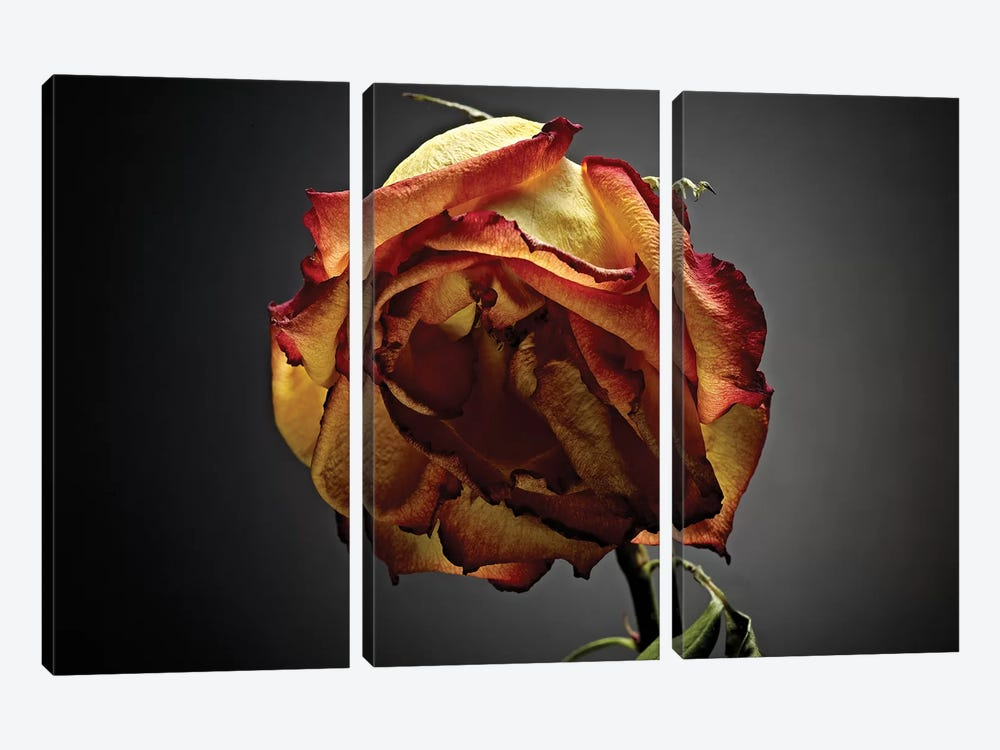 Studio Flowers VI by James McLoughlin 3-piece Canvas Artwork