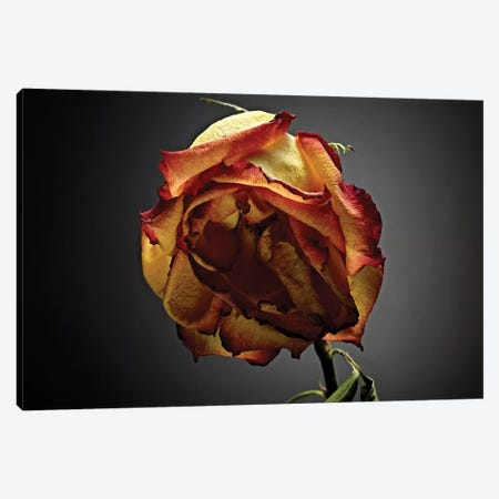 Studio Flowers VI Canvas Print #JML46} by James McLoughlin Canvas Artwork