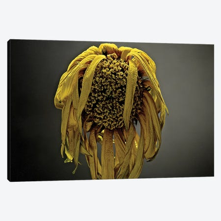 Studio Flowers VII Canvas Print #JML47} by James McLoughlin Canvas Artwork