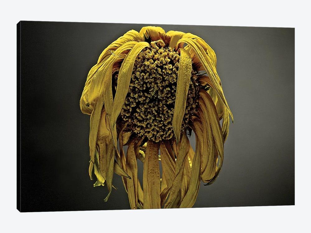 Studio Flowers VII by James McLoughlin 1-piece Canvas Art Print