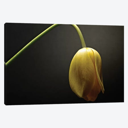 Studio Flowers IX Canvas Print #JML49} by James McLoughlin Canvas Print