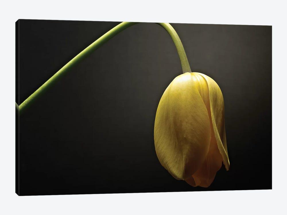 Studio Flowers IX by James McLoughlin 1-piece Canvas Art Print
