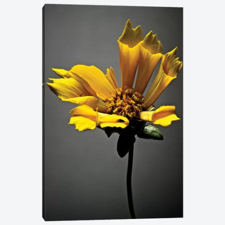 Studio Flowers X Canvas Print #JML50} by James McLoughlin Canvas Wall Art