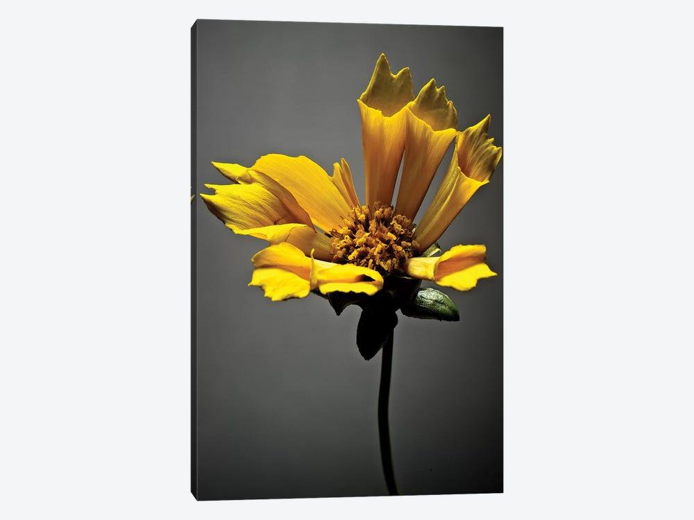 Studio Flowers X by James McLoughlin 1-piece Canvas Art Print