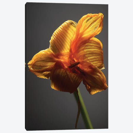 Studio Flowers XI Canvas Print #JML51} by James McLoughlin Canvas Wall Art