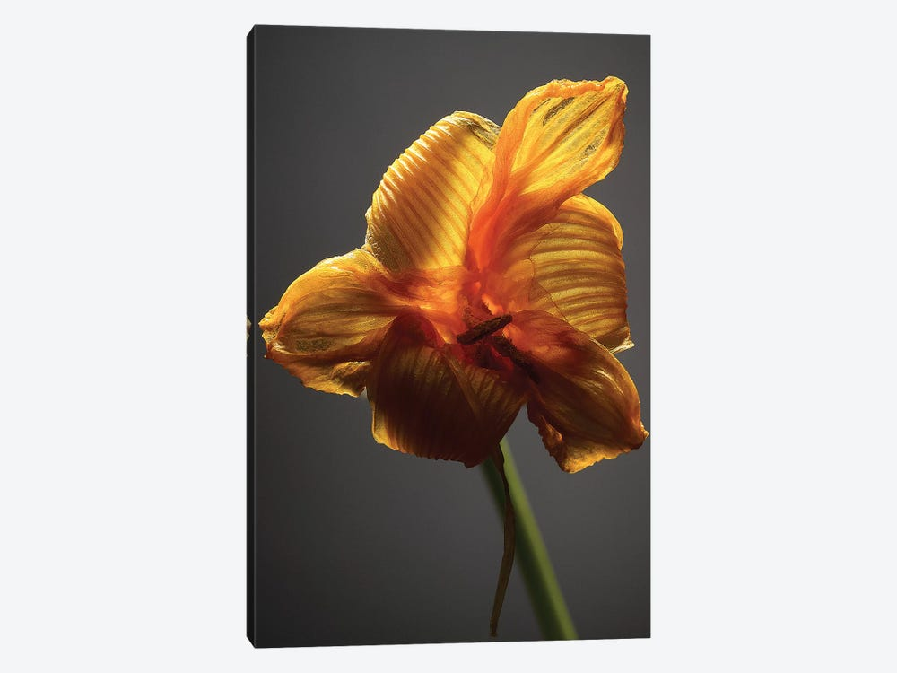 Studio Flowers XI by James McLoughlin 1-piece Canvas Wall Art