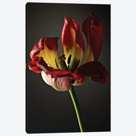 Studio Flowers XII Canvas Print #JML52} by James McLoughlin Canvas Art