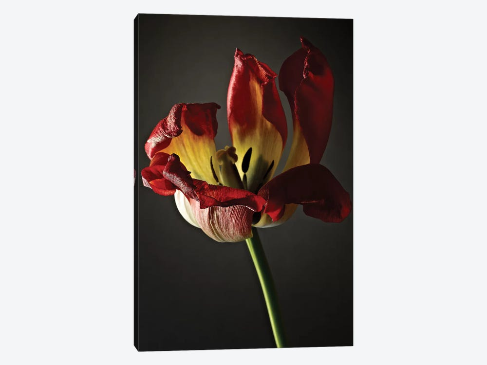 Studio Flowers XII by James McLoughlin 1-piece Canvas Art Print