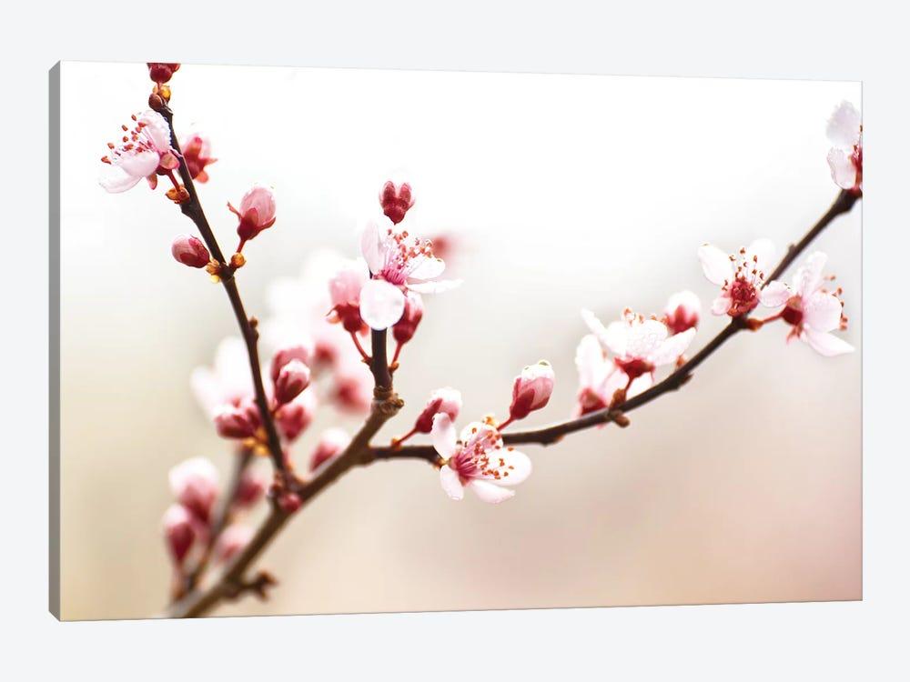Cherry Blossom Study I by James McLoughlin 1-piece Canvas Artwork