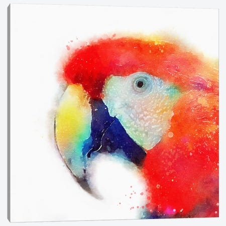 The Articulate Canvas Print #JMO20} by Jacqueline Maldonado Canvas Artwork