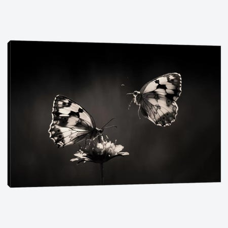 Medioluto Nortea±A Canvas Print #JMY1} by Jimmy Hoffman Canvas Artwork