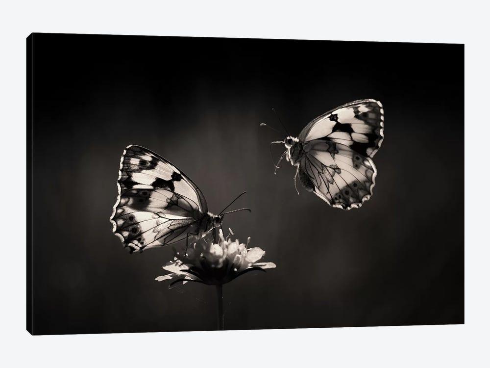 Medioluto Nortea±A by Jimmy Hoffman 1-piece Canvas Print