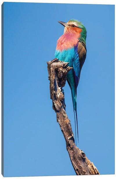 Hummingbird Sight Canvas Art Print