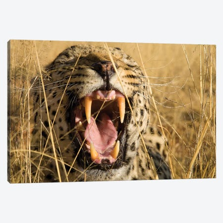 Leopard Growl Canvas Print #JMZ12} by Jimmyz Canvas Artwork