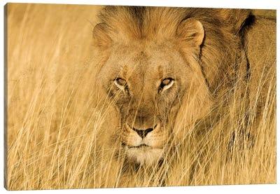 Lion Eyes Canvas Art Print