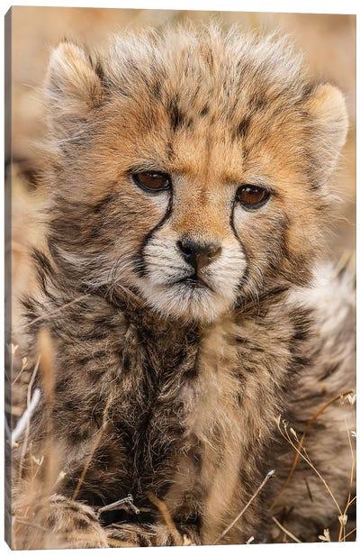 Baby Cheetah Canvas Art Print