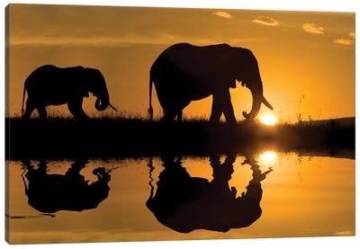 Elephants at Sundown Canvas Art Print