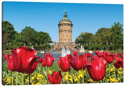 Red Tulip Flowers At The Mannheim Wasserturm In Spring, Baden-Württemberg, Germany Canvas Art Print