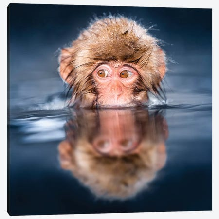 Young Japanese Macaque Taking A Bath In A Hot Spring Canvas Print #JNB125} by Jan Becke Canvas Print
