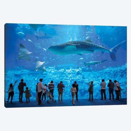 Whale Shark At The Osaka Kaiyukan Aquarium Canvas Print #JNB1459} by Jan Becke Canvas Print